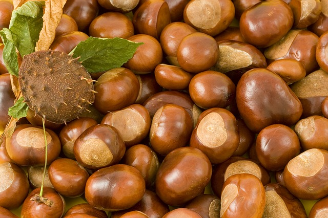 conkers-15186_640